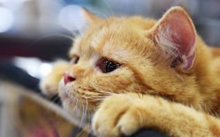 Как выбрать лучший корм для кошек?
