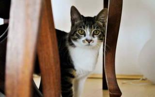 Стресс у кошек симптомы и лечение