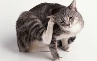 Кишечные паразиты у кошек и котов