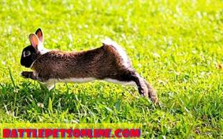 Можно ли вылечить паралич у кроликов