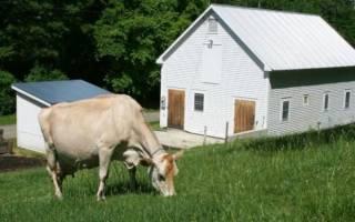 Cодержание крс, ферма для коров своими руками