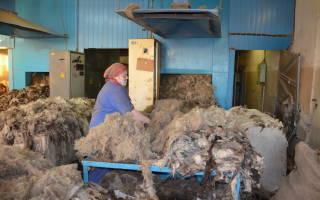 Особенности бизнеса по переработке шерсти овец
