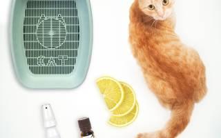 Почему кот гадит и как его отучить