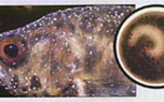 Диагностика болезней рыб