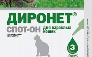 Диронет Спот-он для взрослых кошек