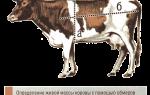 Бонитировка и учет крупного рогатого скота