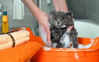 При какой температуре купать кошку