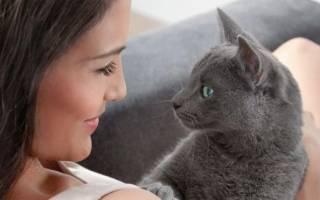 Третье веко у кошки причины и лечение