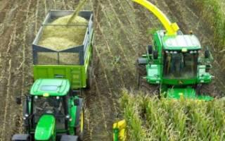 Заготовка кормов для КРС уборка силоса