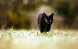 Имена и клички для черных котов
