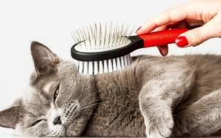 Уход за шерстью и купание кошек