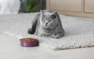 Советы ветеринара как правильно кормить кошку
