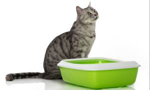 Что делать если у кота зеленый стул