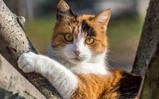 Аскариды у кошек распознавание и лечение
