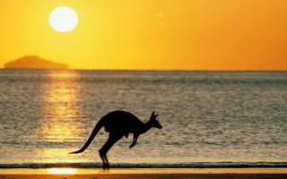 Растительный и животный мир Австралии