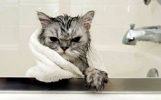С какой частотой нужно мыть кошку