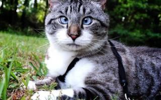 Как определить и вылечить косоглазие у кошек