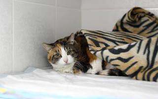 Кастрация кошки за и против