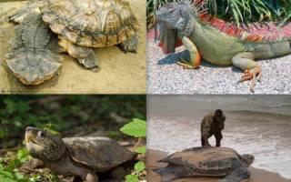 Редкие виды рептилий