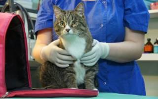 Почему кот лижется после кастрации