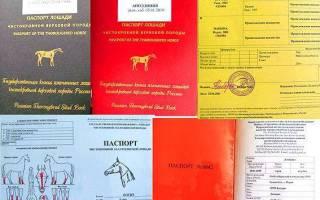 Племенной и ветеринарный паспорт лошади