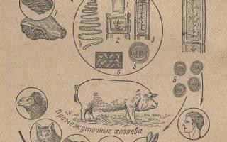 Цистицеркоз свиней — Общая информация