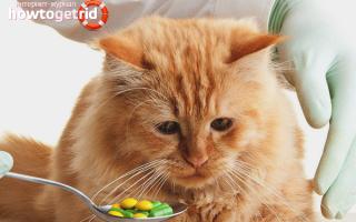 Как правильно давать коту таблетки от глистов