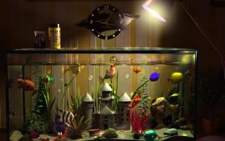 Как должен работать фильтр в аквариуме