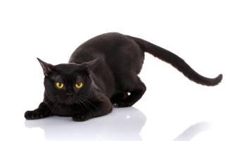 Зачем кот дергает хвостом