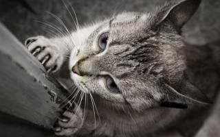 Как отучить кота драть мебель диваны обои