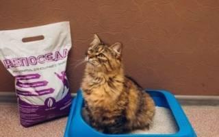 Можно ли смывать кошачий наполнитель в унитаз