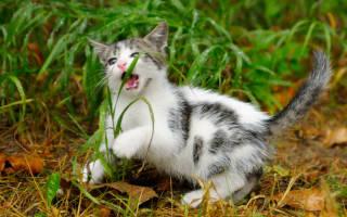 Зачем кошки едят траву и как е вырастить
