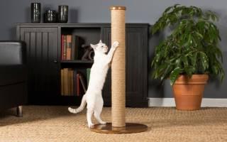 Как отучить кошку точить когти о мебель