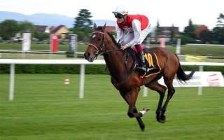 Скаковые лошади содержание и тренинг