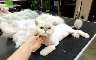 Бывает ли коту жарко