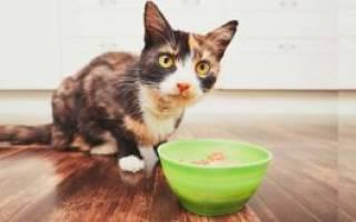 Какой жидкий корм для кошек самый лучший