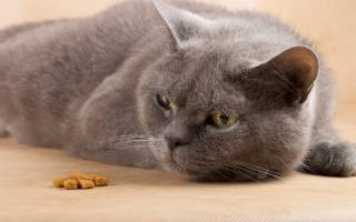 Котнок не ест сухой корм