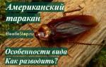 Как ухаживать за американским тараканом