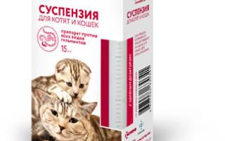 Последствия глистов у кошек — Про паразитов