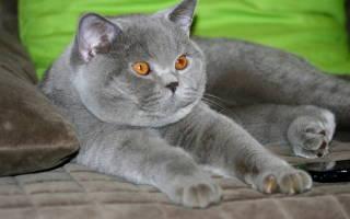 Бешенство у котов: признаки и симптомы