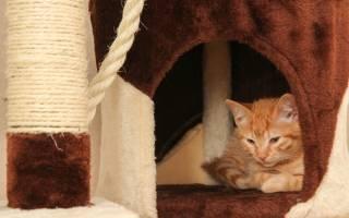 Как приучить кошку к домику быстро и надолго