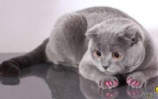 Накладки на когти для кошек польза или вред