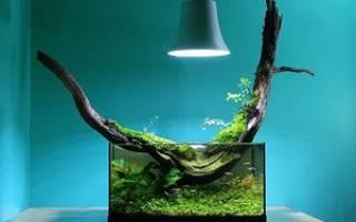 Примеры оформления аквариума