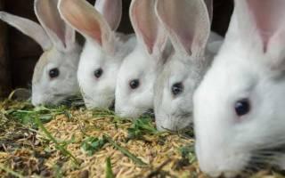 Рационы и корма пшеница для кроликов