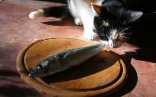 Аллергия у кошки причины и способы лечения