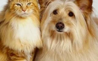 Криптозоология Мексиканская гривастая кошка