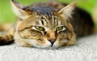 О чем говорит поведение котят