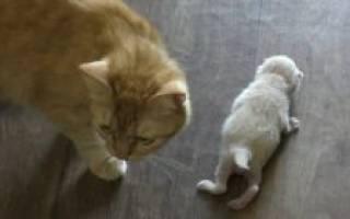 Как отличить новорожденного кота от кошки
