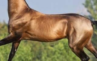 Разнообразные породы лошадей