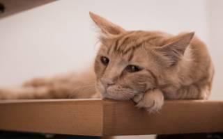 ХПН у кошек и котов симптомы и лечение